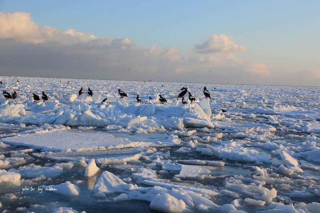羅臼の流氷より~_a0039860_14275142.jpg