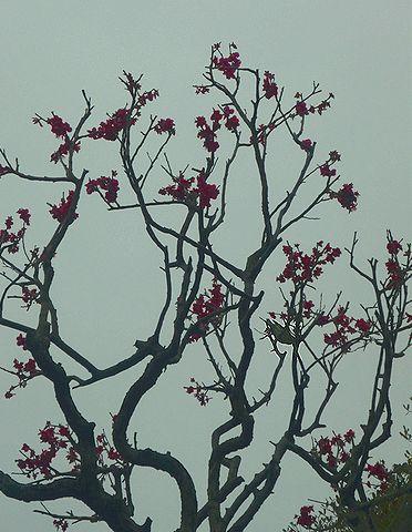 根津美術館。。。カフェ(NEZUCAFÉ) 春の香り 梅に鶯。。*。☆.。†_a0053662_19485061.jpg