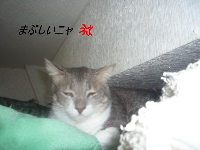 b0112380_1830984.jpg
