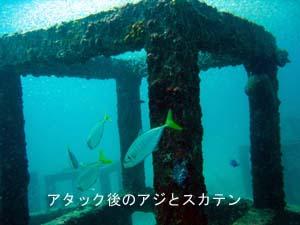 ラチャヤイ島第2弾!_f0144385_21301910.jpg