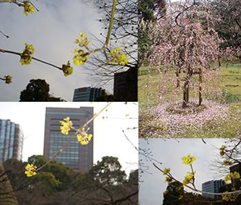 春の息吹。_d0132289_13525320.jpg