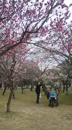 もう春・・・?_f0028791_1483412.jpg