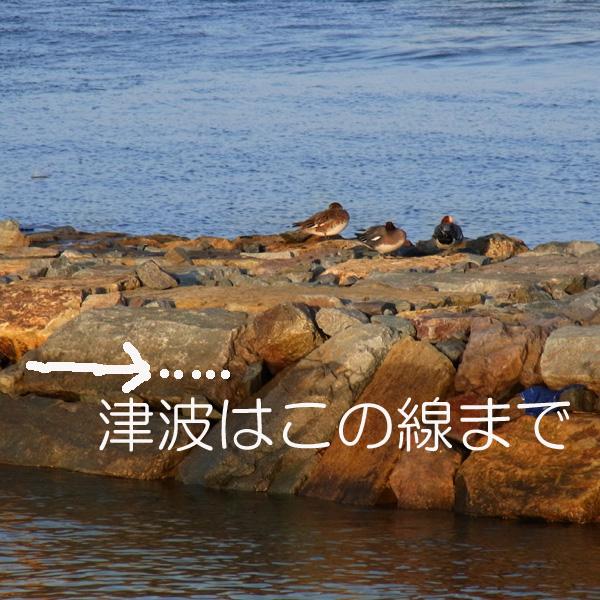 ちいさな津波 by CX2_c0049299_2151878.jpg