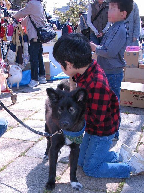 広島 犬 迷子 保護