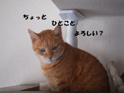 a0147921_21233386.jpg