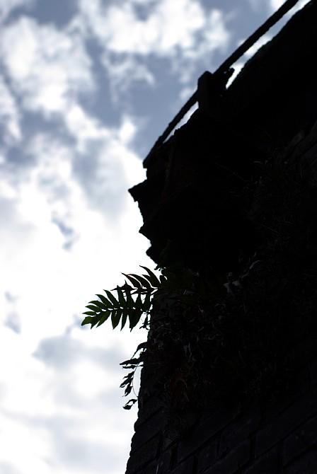 c0136330_20112624.jpg