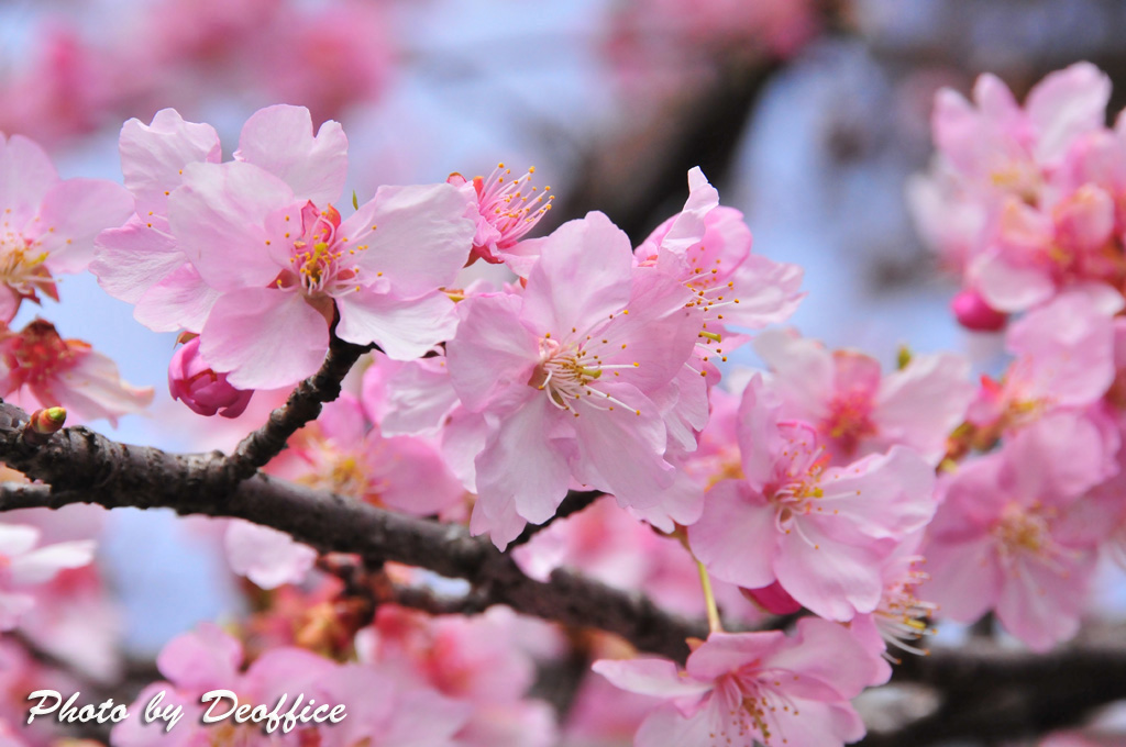2010 春の色を感じて 2010/02/28_e0127034_1521312.jpg