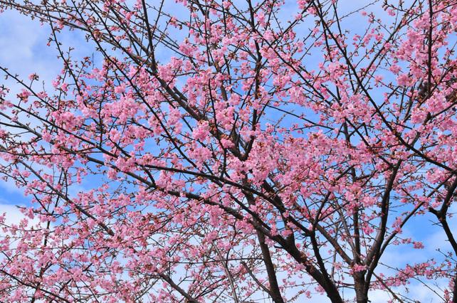 2010 春の色を感じて 2010/02/28_e0127034_1524099.jpg