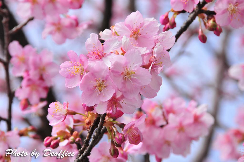 2010 春の色を感じて 2010/02/28_e0127034_153042.jpg