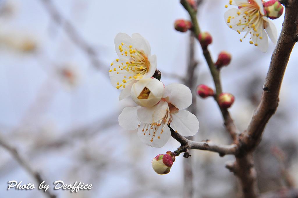 2010 春の色を感じて 2010/02/28_e0127034_1532659.jpg