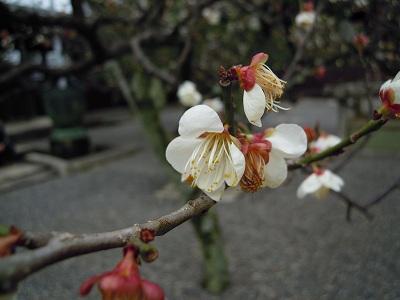 京都、知恩院へ。_a0165538_10113830.jpg