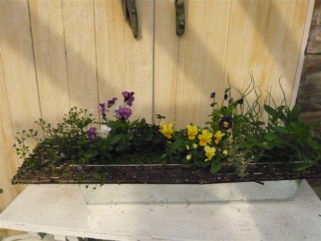 アナーセンのガーデン春の陽気に花もいい感じに咲いています_b0137969_1071564.jpg
