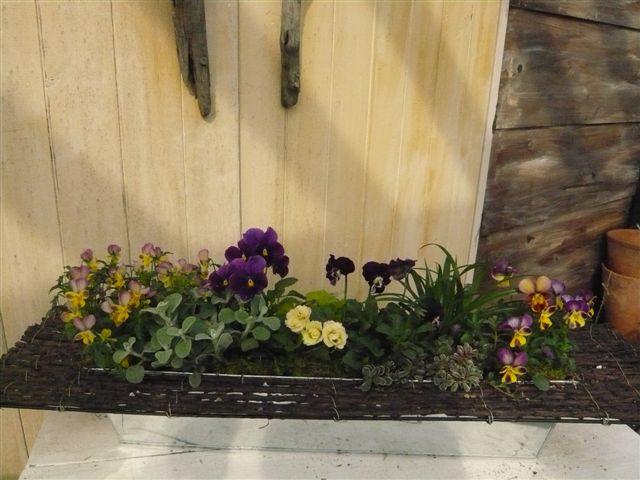 アナーセンのガーデン春の陽気に花もいい感じに咲いています_b0137969_1093682.jpg
