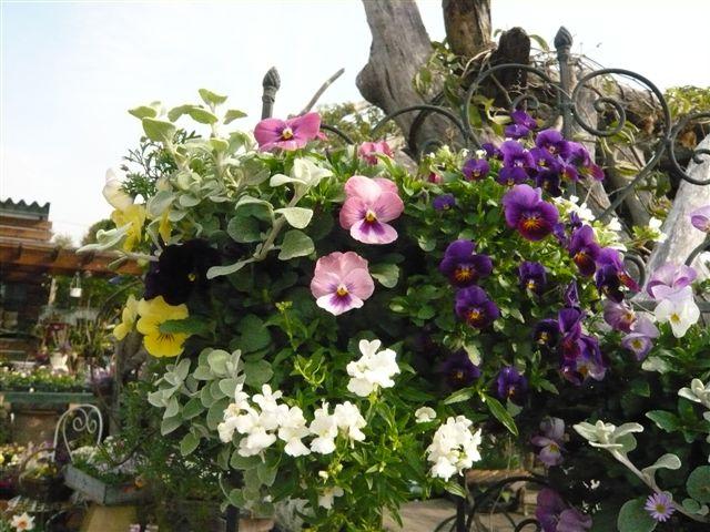 アナーセンのガーデン春の陽気に花もいい感じに咲いています_b0137969_9442257.jpg