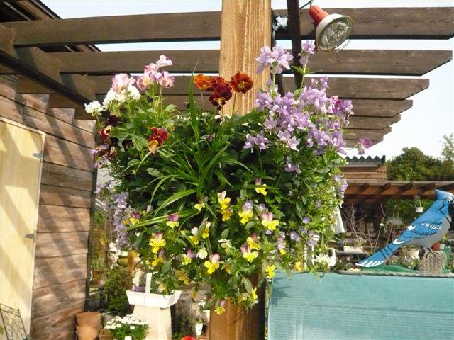 アナーセンのガーデン春の陽気に花もいい感じに咲いています_b0137969_9455157.jpg