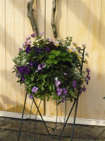 アナーセンのガーデン春の陽気に花もいい感じに咲いています_b0137969_9475712.jpg