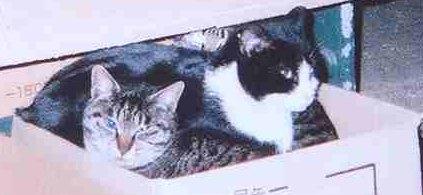 神奈川県より…バーキングエリアの猫たちに愛の手を!!_c0167175_22292476.jpg