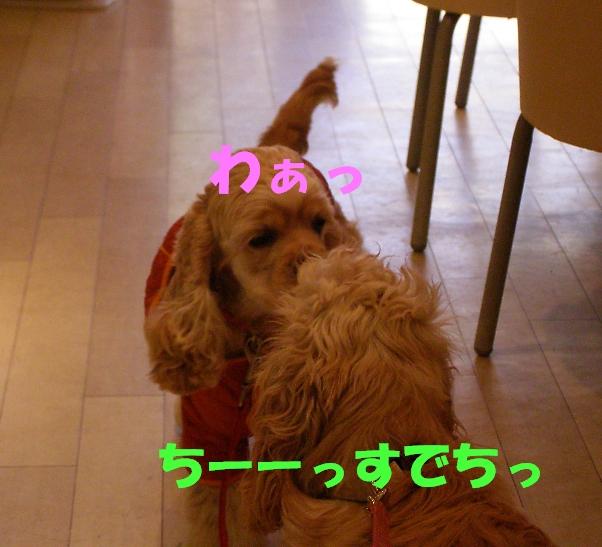 b0067012_19223574.jpg