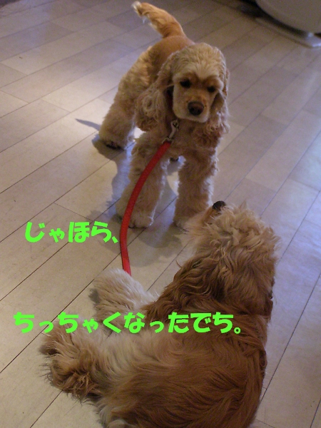 b0067012_19243727.jpg