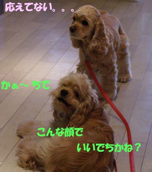 b0067012_19245915.jpg