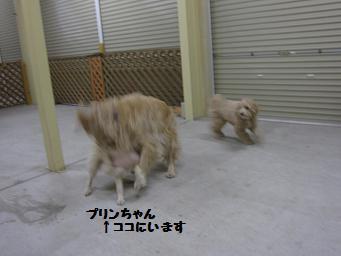 3月2日 プリンちゃんと_e0136815_22474653.jpg