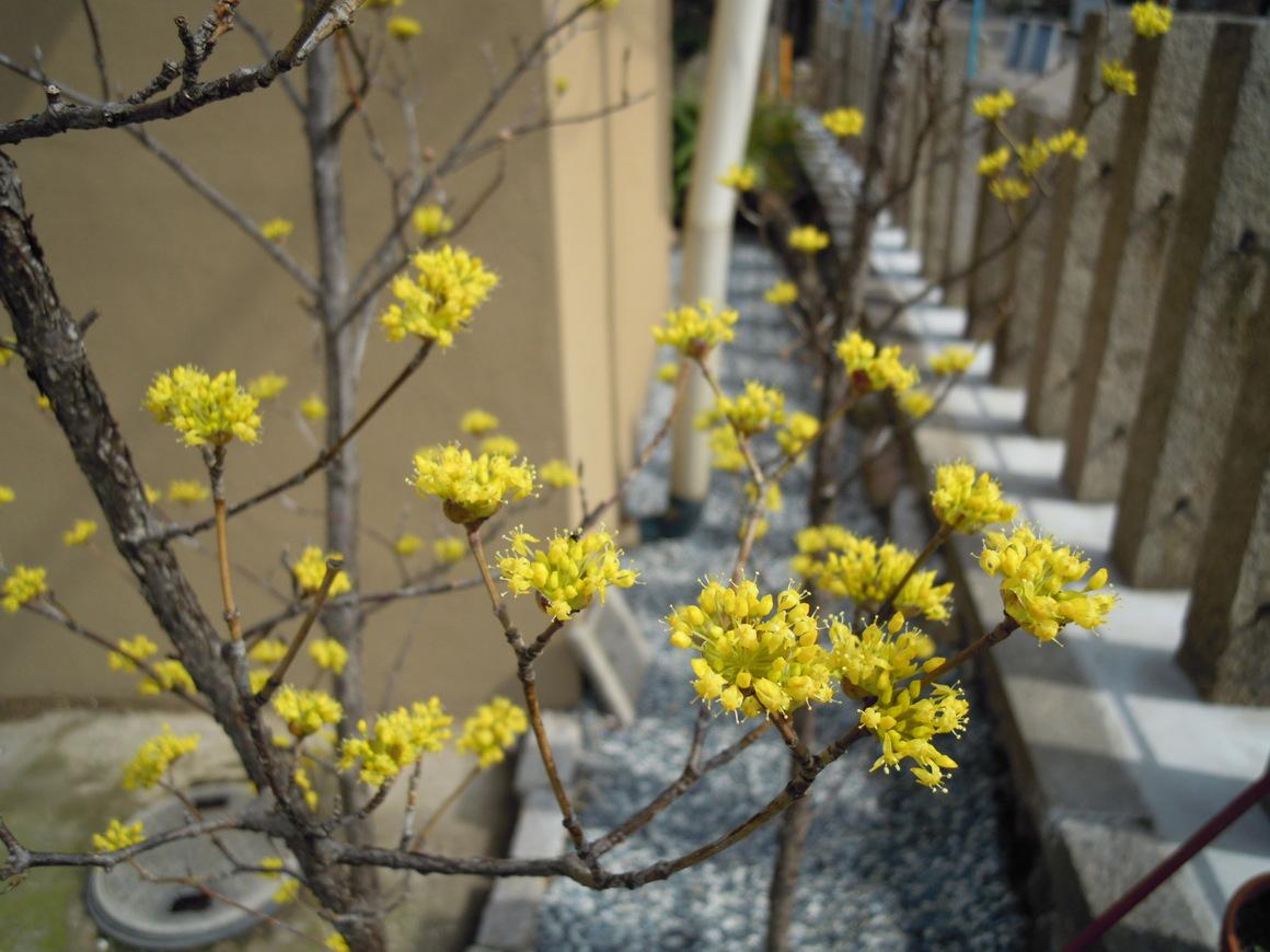 もうすぐ春です_f0218831_15292626.jpg