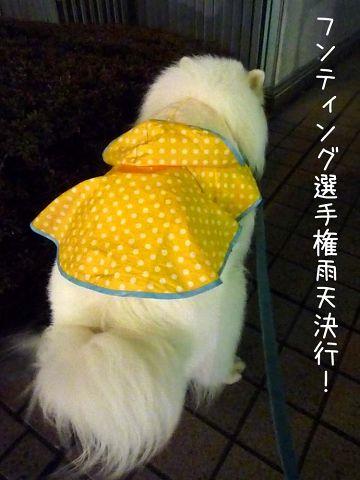 雨上がりのお散歩_c0062832_17281613.jpg
