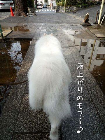 雨上がりのお散歩_c0062832_17283821.jpg