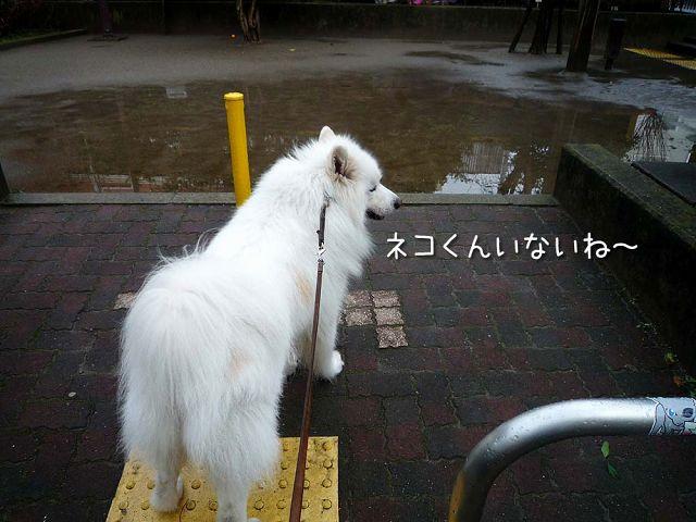 雨上がりのお散歩_c0062832_17284471.jpg