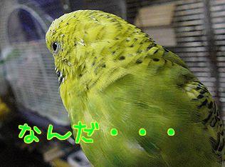 f0196665_02884.jpg