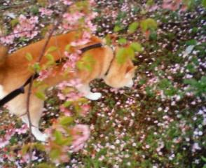 花びらが…_b0011075_19163052.jpg