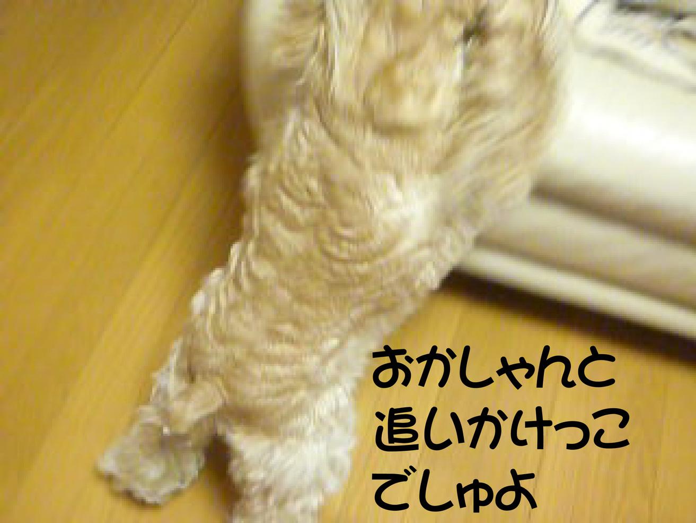 f0218182_16585337.jpg