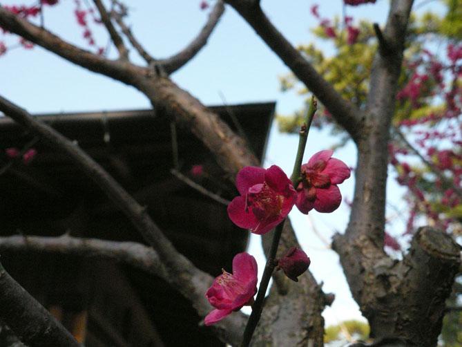 桃の節句_f0201310_1992374.jpg