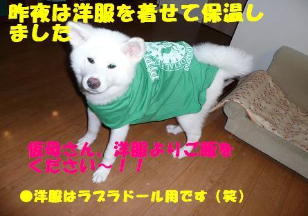 f0121712_842593.jpg