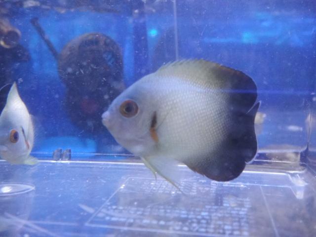 海水魚・サンゴ_f0189122_13275069.jpg