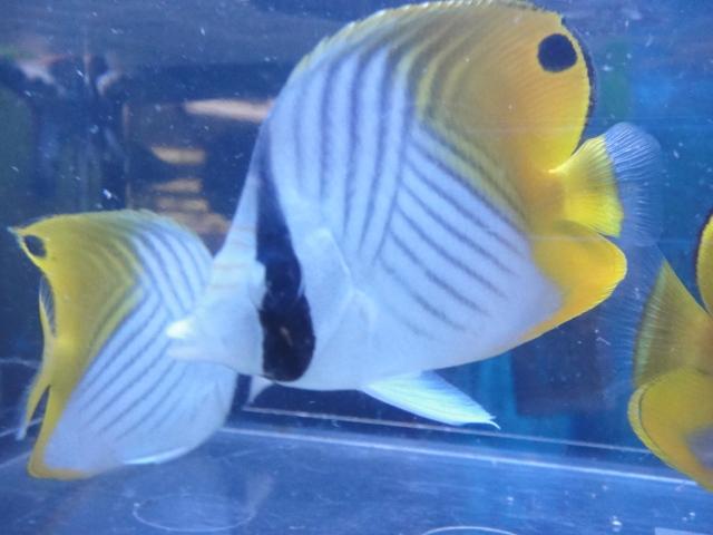 海水魚・サンゴ_f0189122_13283174.jpg