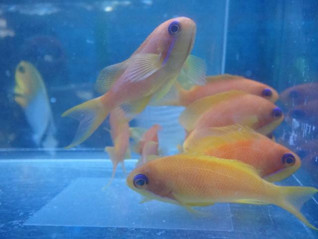 海水魚・サンゴ_f0189122_13302196.jpg