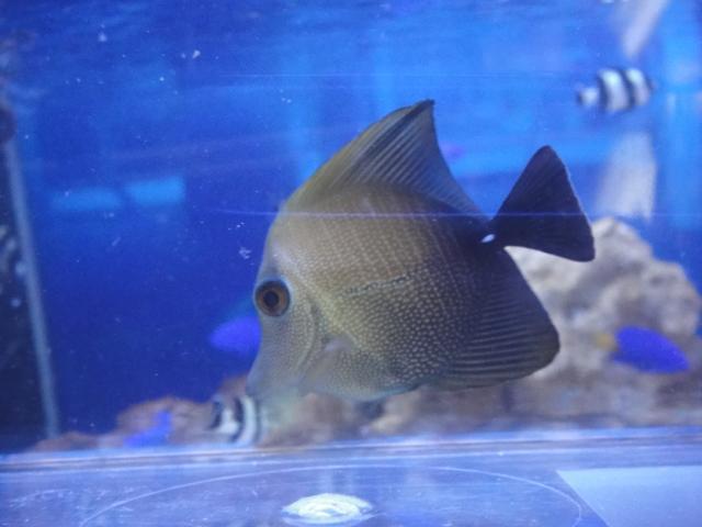 海水魚・サンゴ_f0189122_1332241.jpg