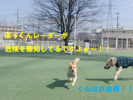 f0176830_20345836.jpg