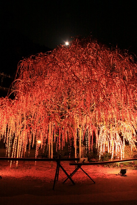 梅月夜-umezukiyo-_a0122544_19544428.jpg