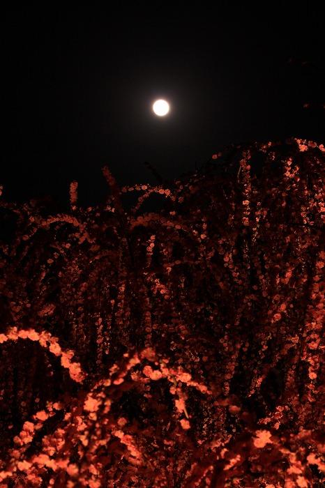梅月夜-umezukiyo-_a0122544_19582554.jpg