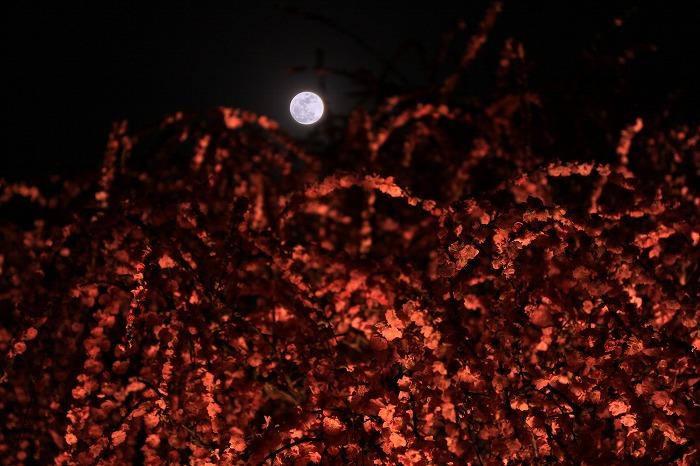 梅月夜-umezukiyo-_a0122544_2022746.jpg
