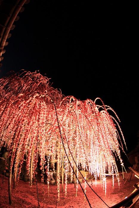 梅月夜-umezukiyo-_a0122544_206484.jpg