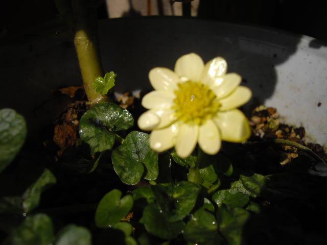 庭の春。_d0116059_1723093.jpg