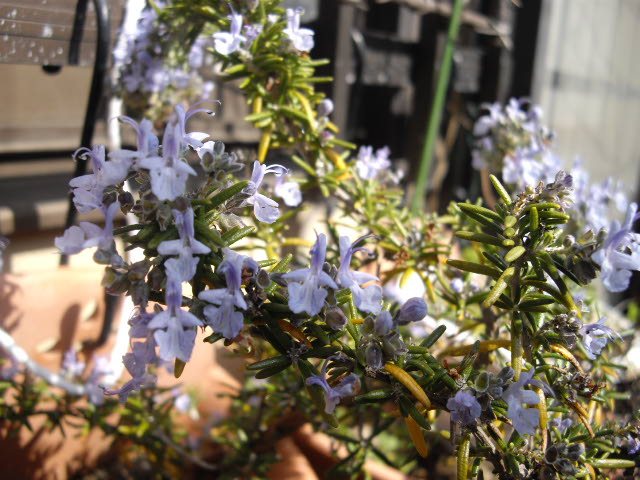 庭の春。_d0116059_17293851.jpg