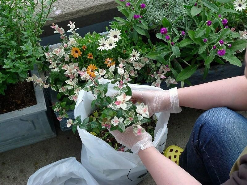 一日休み ARUPYのトリミングと 秋の花植え_a0160581_20503692.jpg