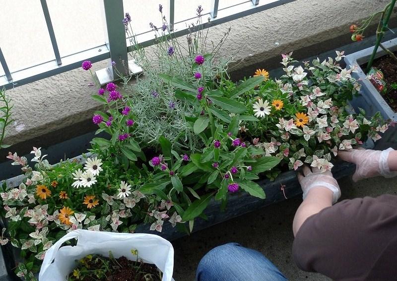一日休み ARUPYのトリミングと 秋の花植え_a0160581_20504727.jpg