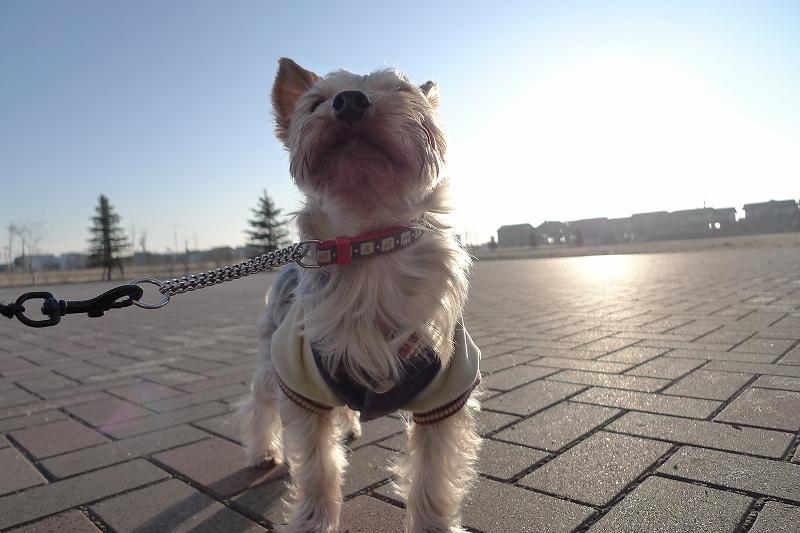 風が冷たい 朝の散歩は午後にしないといけないかもD-LUX4_a0160581_21183235.jpg