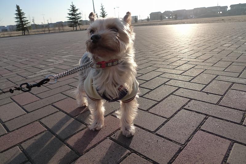 風が冷たい 朝の散歩は午後にしないといけないかもD-LUX4_a0160581_21184235.jpg