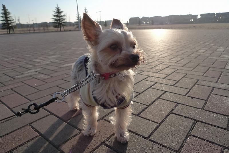 風が冷たい 朝の散歩は午後にしないといけないかもD-LUX4_a0160581_21185349.jpg